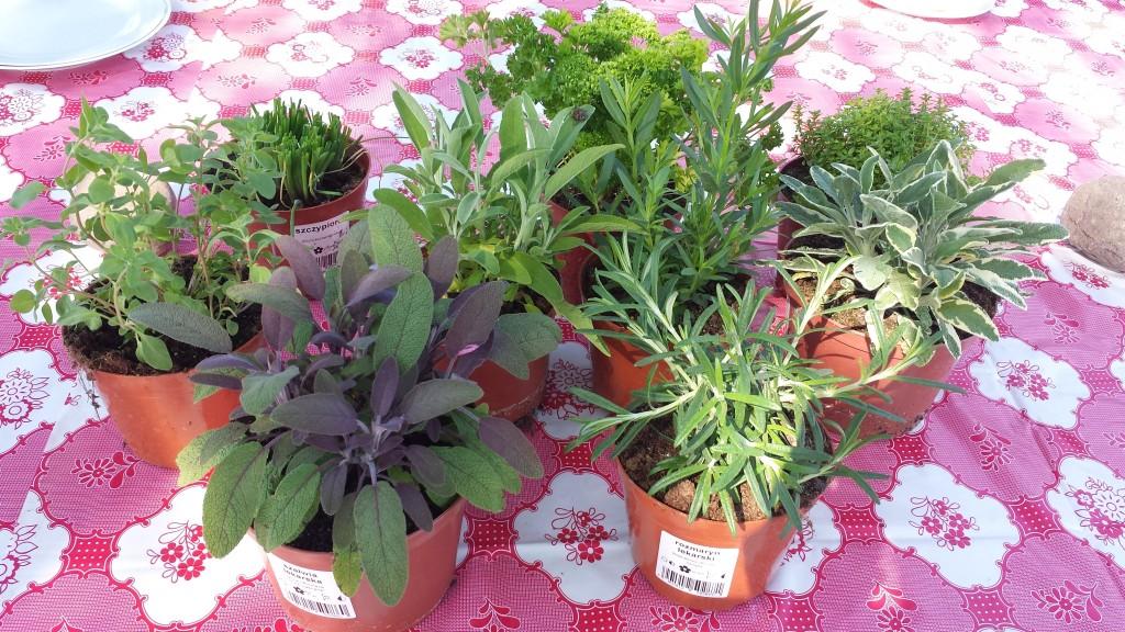 warsztaty w Ogrodzie w Koninie- zdrowy ogród